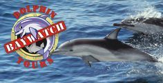 BayWatch Dolphin Tours - The Home of Affordable Family Fun in Galveston, Texas. Come spot the dolphins with us on Galveston Harbor! We're the family owned and operated dolphin tour boat in downtown Galveston!