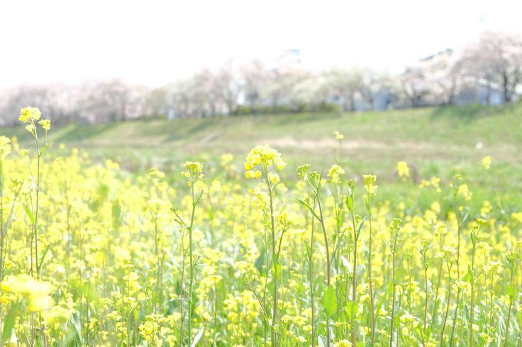 Spring has come. (Iwaki-city, Fukushima, JAPAN)