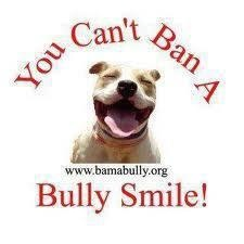 a bully smile :): Dogs, Pitti Smile, Pet, Doggies Stuff, Pit Bull, Doggies Pics, Bullies Smile, Pitbullsmisunderstood Breeds, Animal