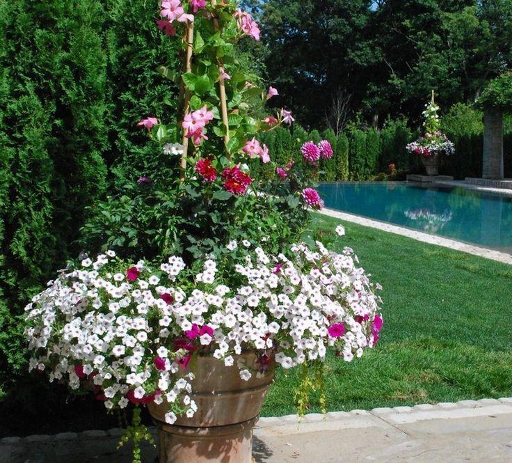 Lovely Winter Garden Ideas Uk Part - 8: Winter Container Garden Ideas Uk - Google Search