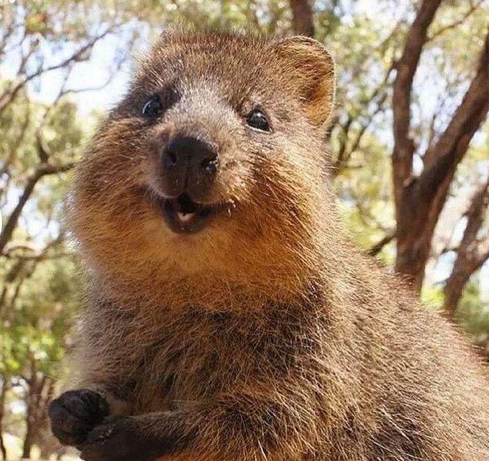 Pin By Alleah Brown On Zveri Cute Animals Happy Animals Animals
