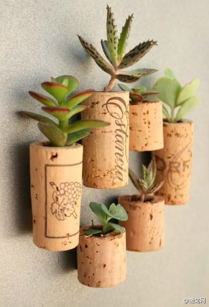 using cork as planter! hmm... why didn't i think of that.