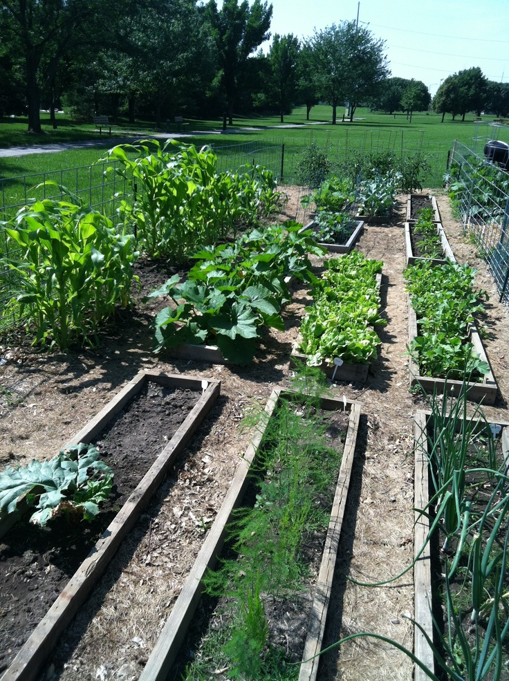 17 Best Images About Lenexa Community Gardens On Pinterest