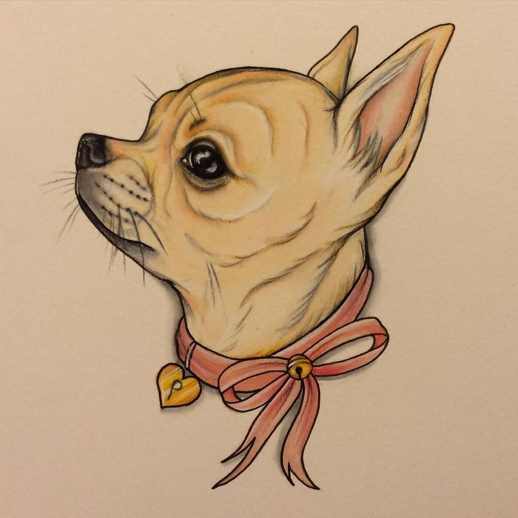 Line Art Dog Tattoo : Chihuahua puppies long pictures to pin on pinterest