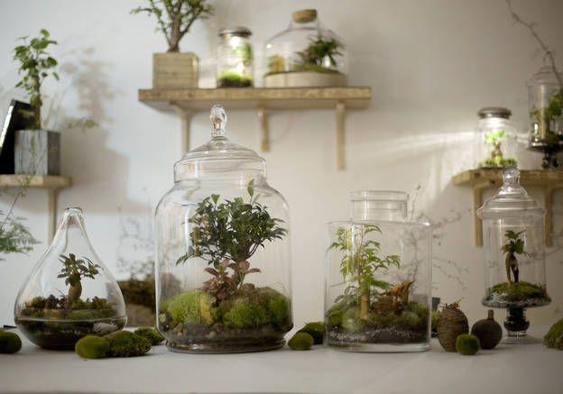 DIY : mode d'emploi du terrarium. Ne s'arrose que 2 fois par an, c'est pratique ca. ;)