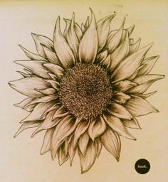 Sunflower on the side of the ribcage