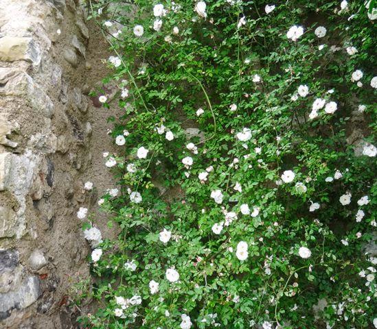 34 best Garten images on Pinterest Flowers garden, Flower beds and