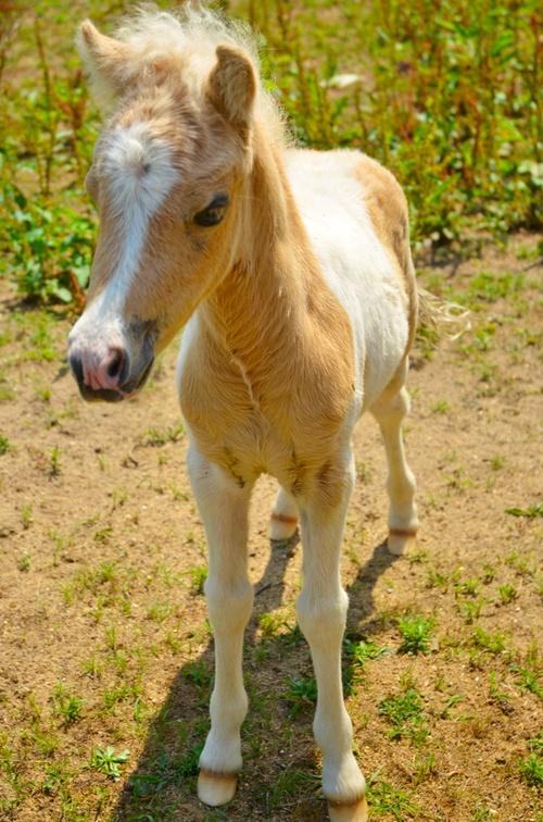 Aw...Free Horses, Horses Lovers, Majestic Horses, Pretty Horses, Hors Lovers