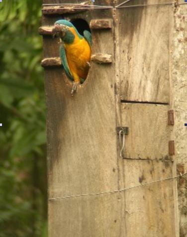 Entrevista Mauricio Herrera Biologo y Conservador de loros en LoroMania.com