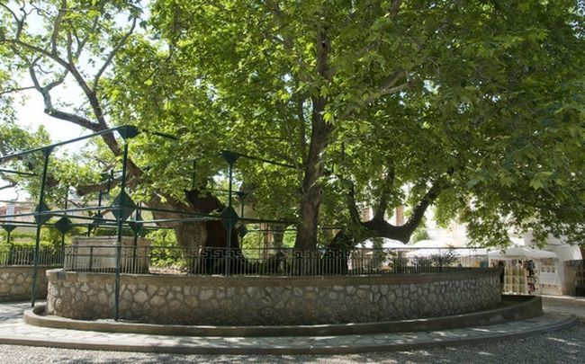 """Planning to visit #Kos for #vacation this #summer? Pay a quick visit to the famous """"Tree of #Hippocrates """"! Book your #transfer today!"""