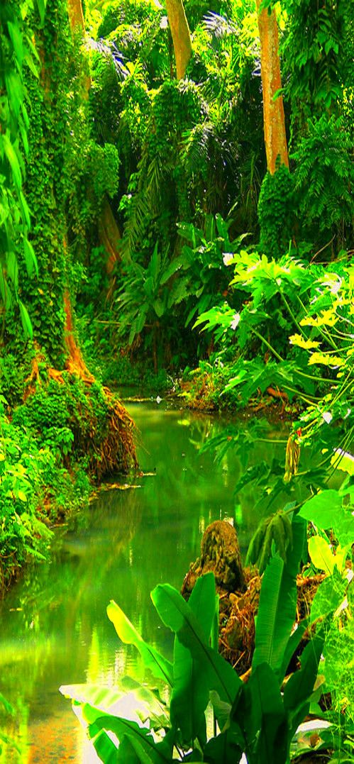 Costa Rica #Rainforest...start a day with #amazing #pictures on www.7picaday.com & enjoy it :):) Specially Selected for You & Your friends too so share it :) good day :)