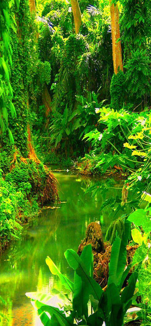 Costa Rica #Rainforest