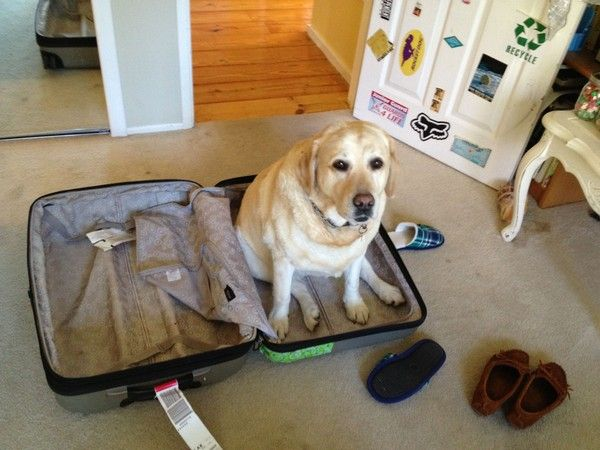 17 Pets Who Can't Believe You Aren't Taking Them On Your Trip
