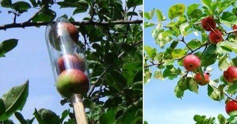 Cómo+hacer+un+recolector+de+fruta+casero