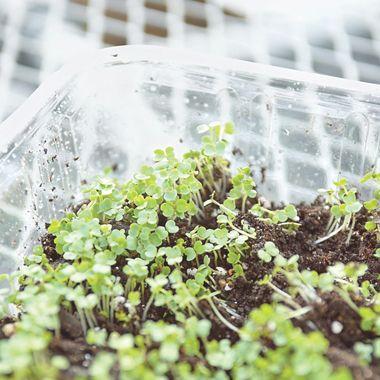 108 best Microgreen Gardening images on Pinterest Indoor