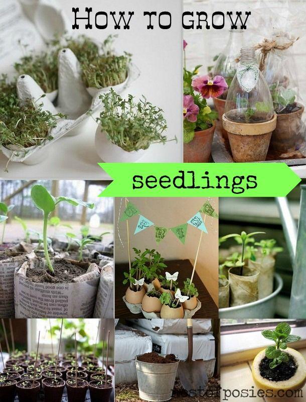 9 tips & tricks on How to grow seedlings via Nest of Posies #gardening