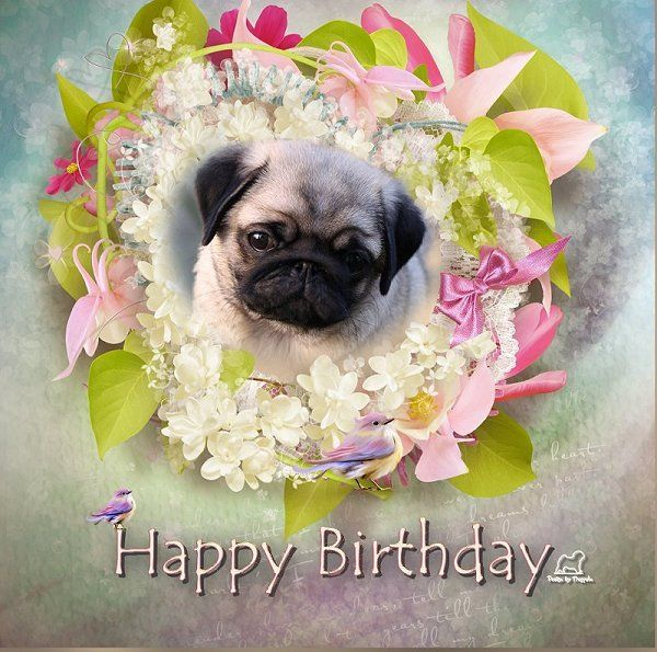 19 Best PUG BIRTHDAY CARDS Images On Pinterest