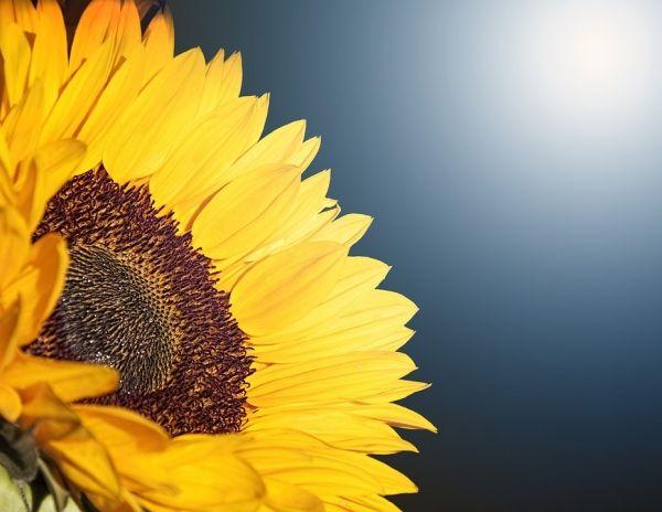 Pin By Solar Energy Home On Home Solar Panels Purple Flowers Wallpaper Sunflower Illustration Flower Wallpaper