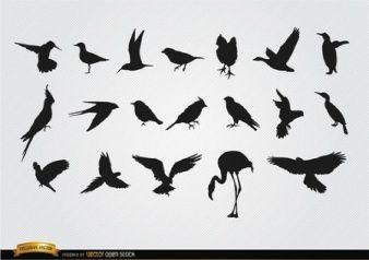 Las aves siluetas vector conjunto
