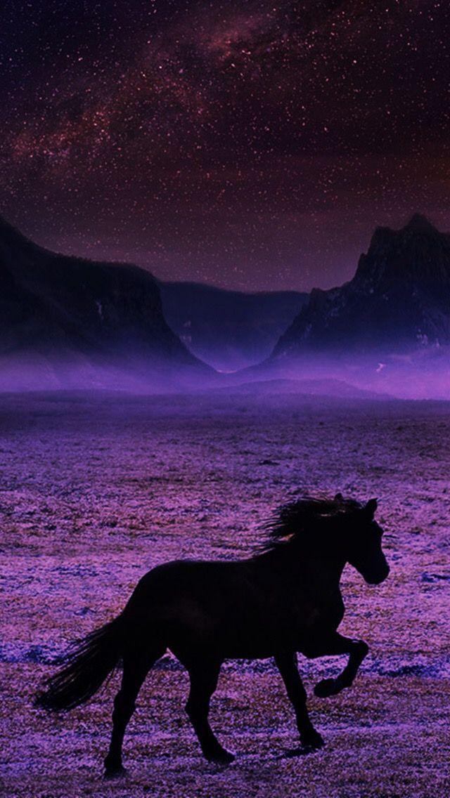ein schwarzes pferd mit lila hintergrund coole fotos pinterest lila hintergr nde. Black Bedroom Furniture Sets. Home Design Ideas