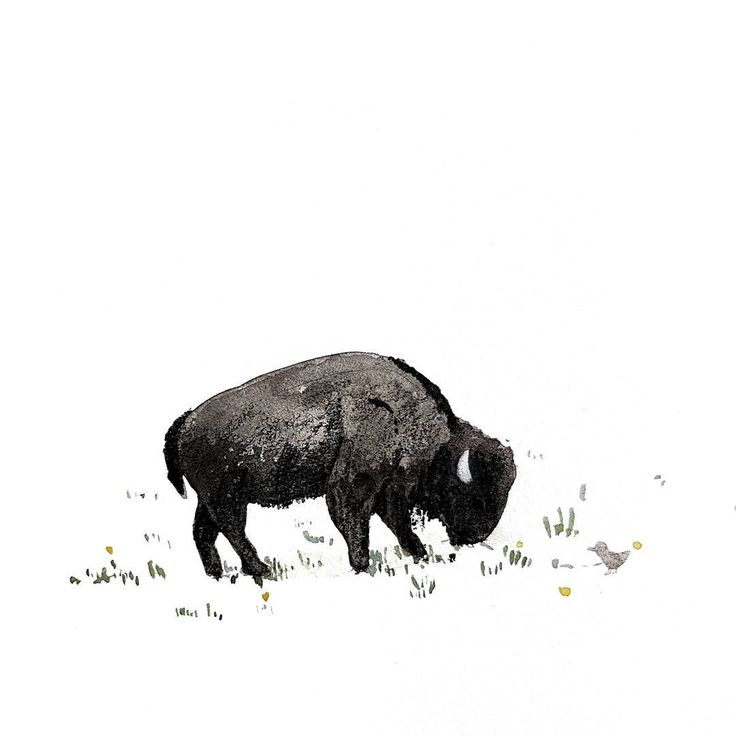 Visiting Yellowstone National Park last year left me with a soft spot for bison! . . . #illustration #sketch #yellowstone #nationalpark #usa #notapostabouttrump #design #cute #livethelittlethings #nature #bison #grazing #melbourneartist #travel #wanderlust #watercolor #pencil #lovelysquares #sketchbook #drawing #watercolour #original #lovelysquares