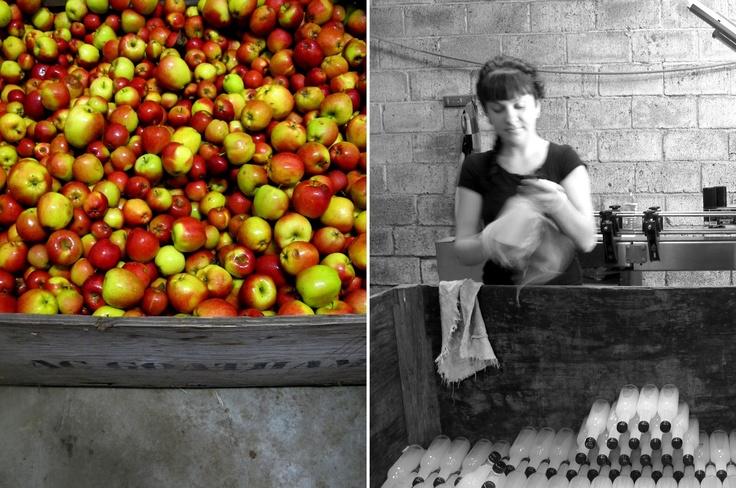 Chegworth Valley Farm- Apples