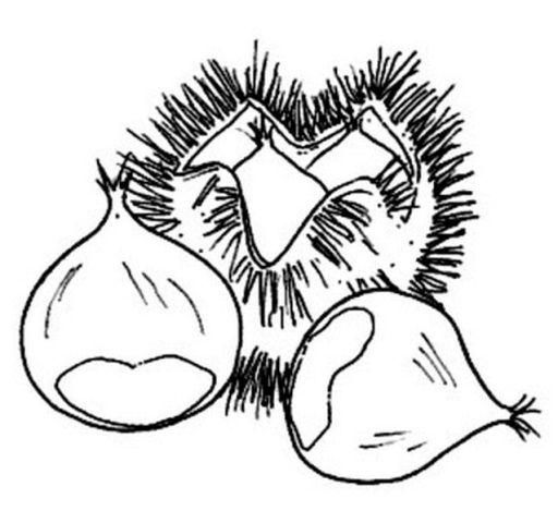 desenhos de frutos de outono para pintar - Pesquisa Google
