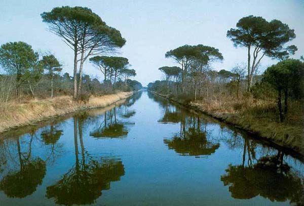 La bellissima pineta di Classe, che si estende per 709 ettari lungo il litorale di Ravenna