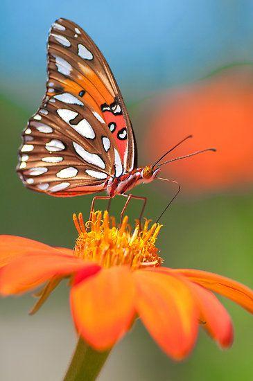 ~~ Orange Passion by Briar Richard ~~