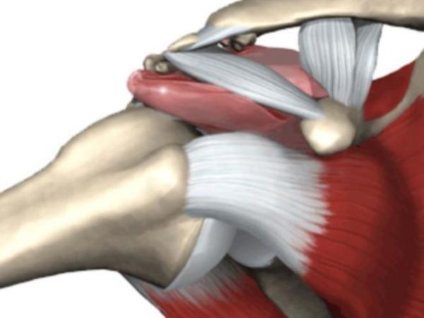Testo e disegni di Stelvio Beraldo L'articolazione scapolo-omerale si caratterizza per la capacità di permettere in maniera molto ampia i movimenti del braccio su tutti i piani spaziali. Questo è possibile per la presenza di una modesta cavità glenoidea della scapola (praticamente la testa dell'omero è più poggiata che inserita) e una capsula articolare lassa. …