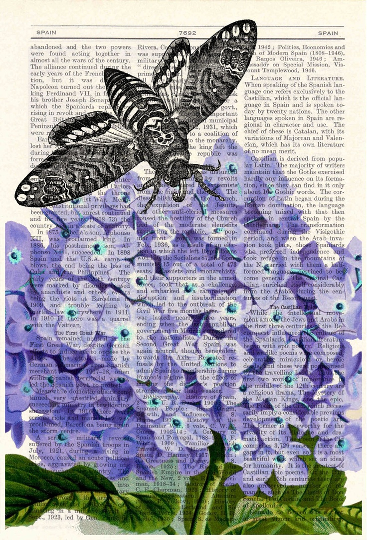 Vintage Book Print Dictionary or Encyclopedia Page Print Moth over Hidrangea print on Vintage Dictionary Book art. $7,99, via Etsy.