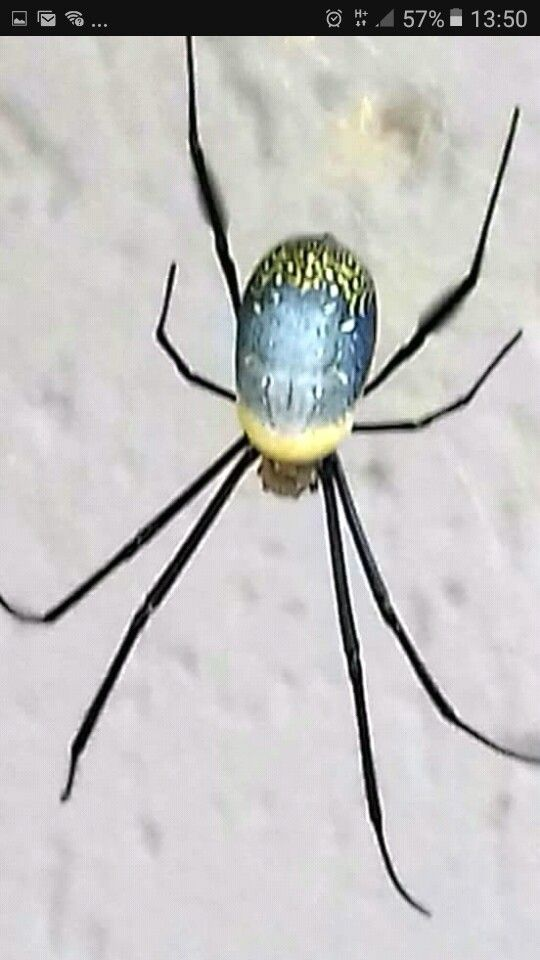 beautiful spider found at our house in hartbeespoort goggas rh pinterest com
