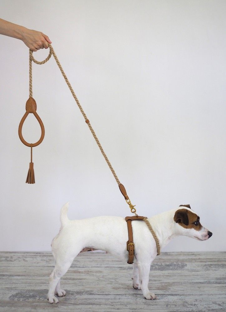 Online Shopping For With Free Worldwide Shipping Dog Harness Dog Walking Accessories Dog Leash