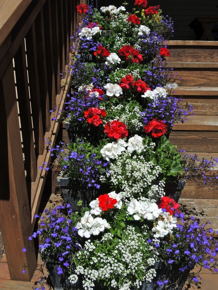 Fourth of July flowers for your stoop