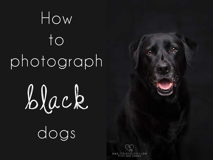 how to photograph black dogs - we need this!                                                                                                                                                                                 More