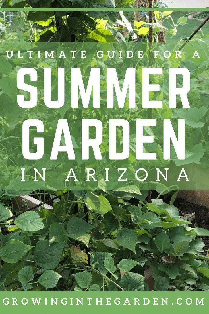 Food Tips And Tricks #GardeningTipsWinter | Gardening Tips Winter |  Pinterest | Gardening tips, Tips and Food hacks