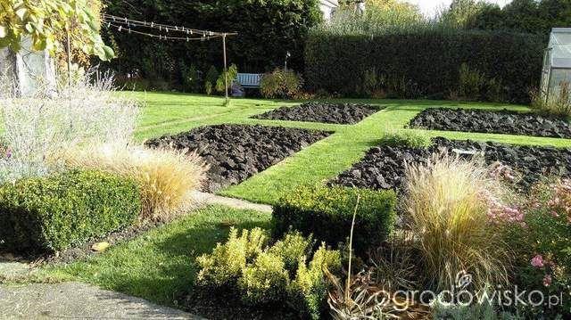 Pokażę nasz ogród - strona 308 - Forum ogrodnicze - Ogrodowisko