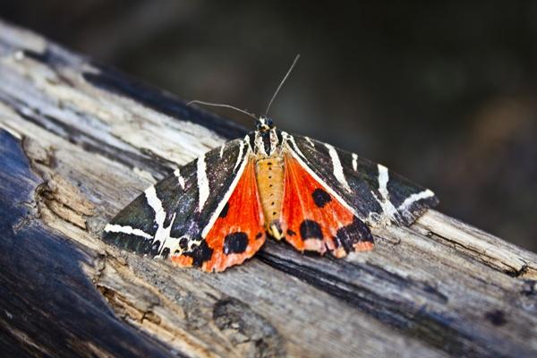 Butterfly Valley, Rhodes Island, Dodecanese,Greece, Amazing Greece, Долина бабочек, Остров Родос, Греция, Журнал Удивительная Греция,