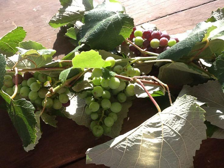 Grape seed oil, we love it !!