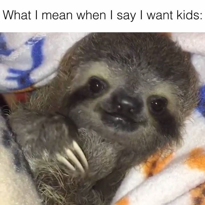 2333 best Sloths-my favorite images on Pinterest   Sloth, Sloths and ...