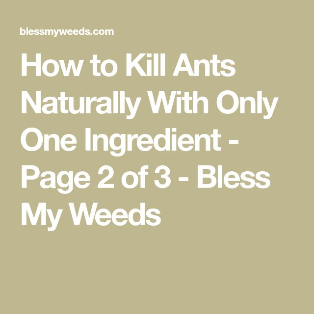 How to Kill Ants Naturally With Only One Ingredient - Page 2 of 3 - Bless My Weeds