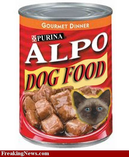 honest kitchen dog food feeding guide