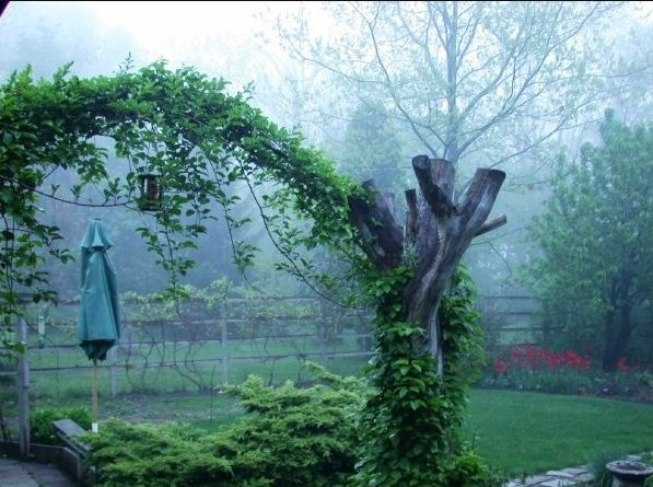 19 Best Trellis Images On Pinterest Climber Plants