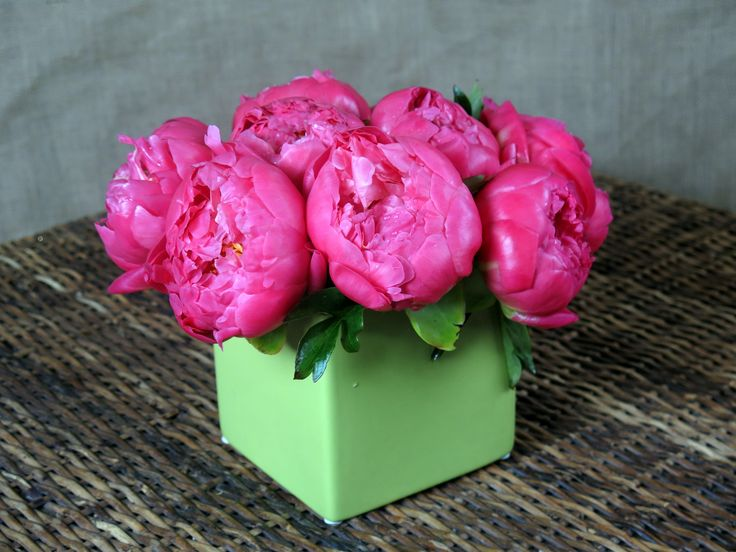 A lush, radiant cluster of vibrant coral peony in a green ceramic.