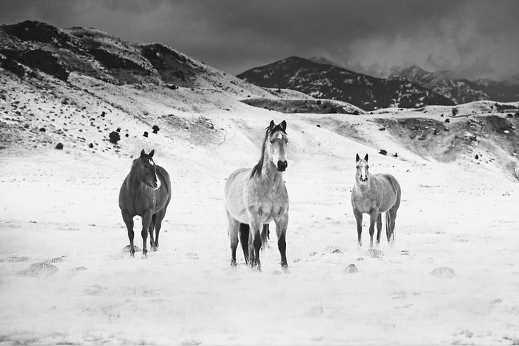 I Chase Wild Horses In North America To Photograph Their Beauty   Bored Panda