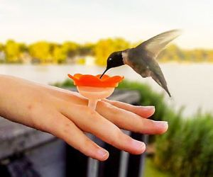 1c0eadef96af7d71273542d7d16b4fce - How To Get A Hummingbird To Land On Your Finger
