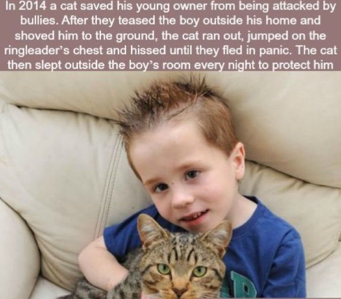 Wow, just goes to show that cats are JUST as amazing as dogs