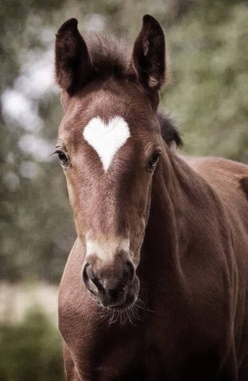 he is so cute he even with that heart on his head!! <3<3<3<3 | Horse markings, star, heart