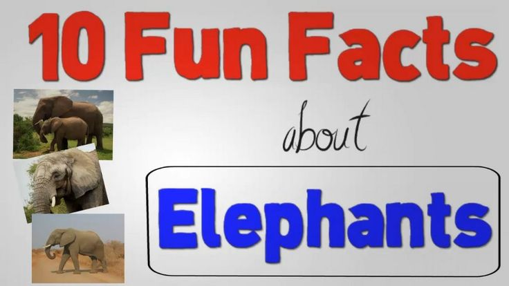 10 Fun Facts About Elephants