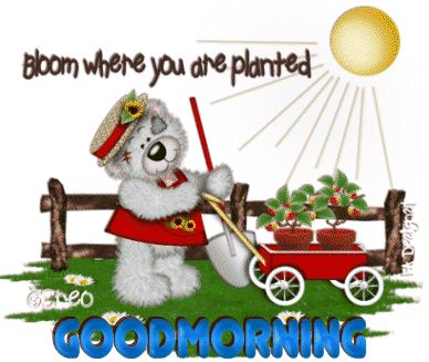 Good Morning Bloom where you are planted greetings good morning good morning greeting good morning quote good morning poem good morning friends and family good morning coffee